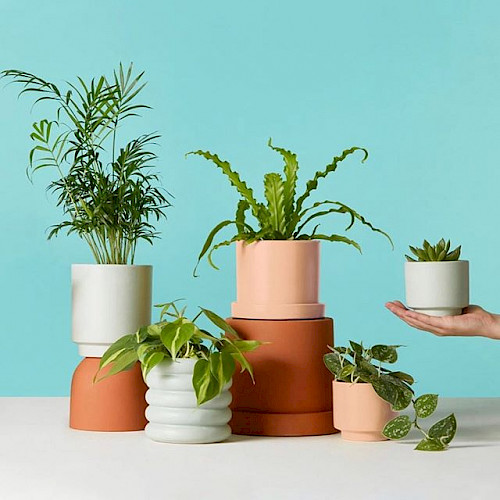 Plants in vases